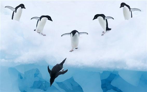 Fond d'écran L'eau Penguins neige glace