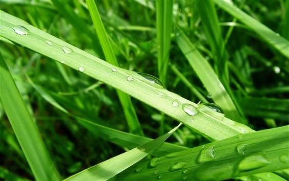 Обои Росы на зеленом листе травы