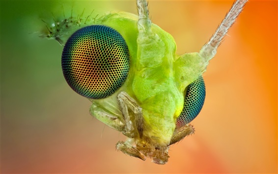 Wallpaper The insect compound eye macro