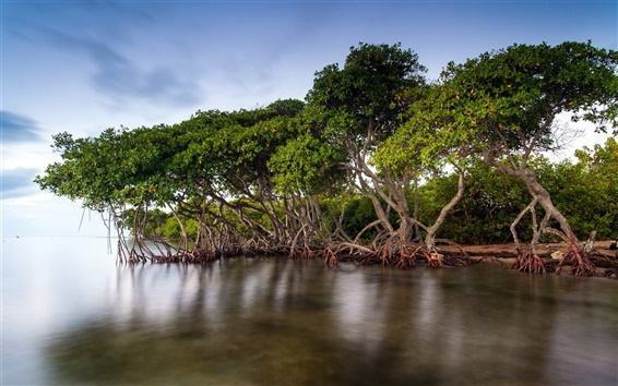 Wallpaper The mangrove forests of the lake scenery