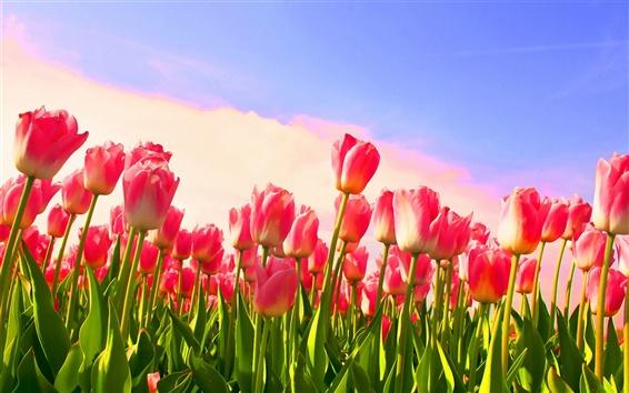 Hintergrundbilder Tulip Knospen Himmel