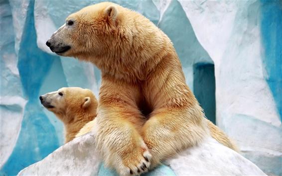 桌布 兩個北極熊