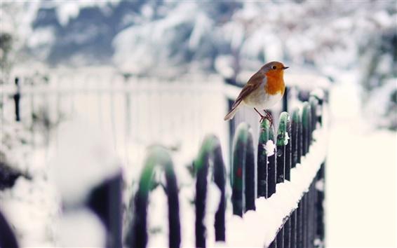 Fondos de pantalla Aves de invierno la nieve cerca de
