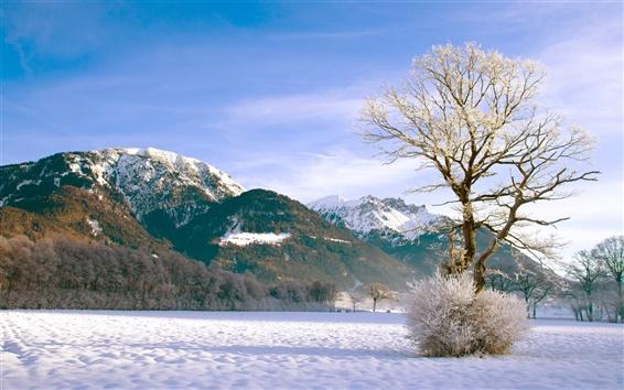 Papéis de Parede Inverno montanha de neve floresta de árvores arbustivas