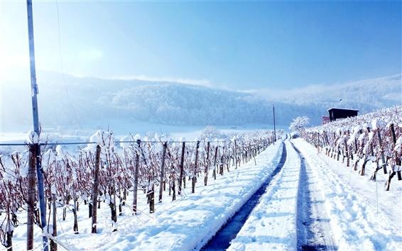 Обои Зимний снег дороги