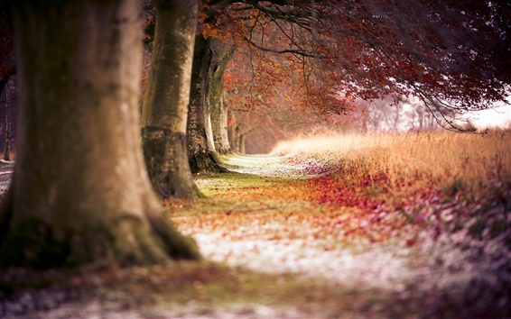 Wallpaper Autumn red maple forest