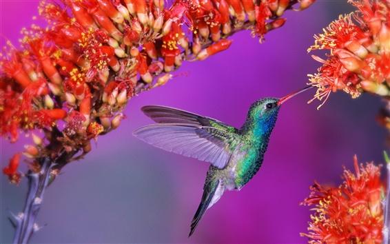 Wallpaper Beautiful birds hummingbird