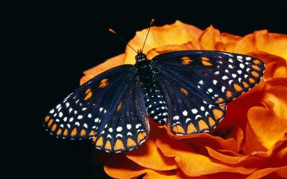 Papéis de Parede preto borboleta