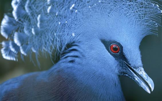 Fondos de pantalla Cuerpo de color azul las aves
