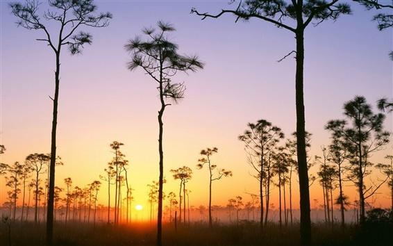 Fond d'écran Broussaille marais arbres désert