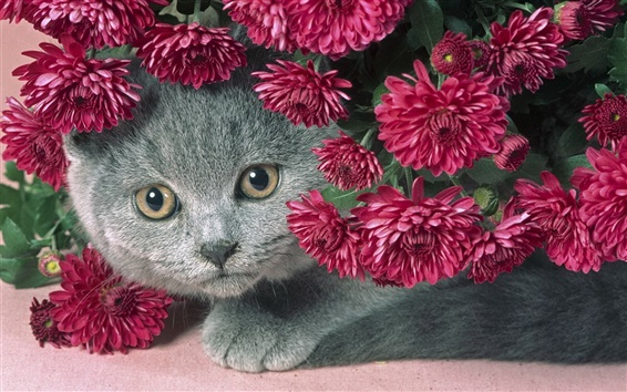 Wallpaper Cat and flowers