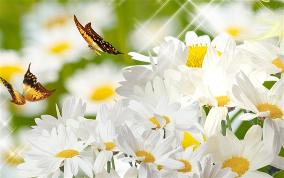 Wallpaper Daisy and butterfly