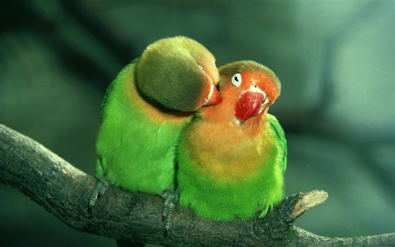 Wallpaper Expression of the intimate parrot birds