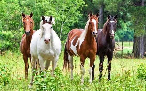 Обои Четыре лошади на траве