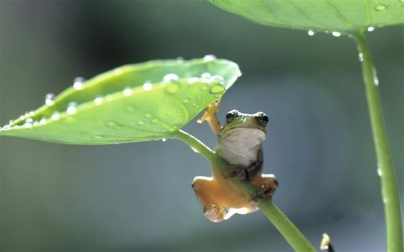 배경 화면 녹색 잎 개구리