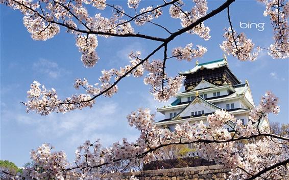 Wallpaper Landscape temple of spring flowers