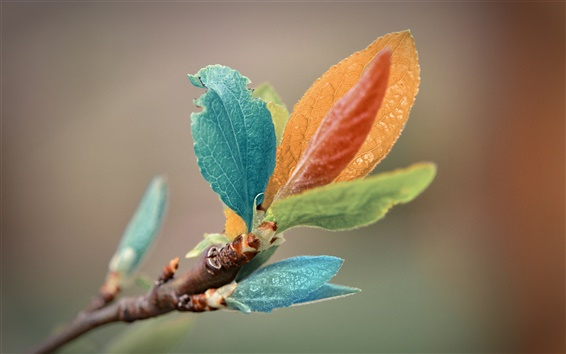 Wallpaper Leaves of different colors