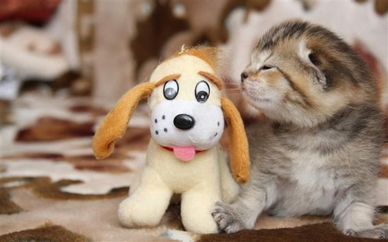 Обои Маленькая кошка с собакой игрушки