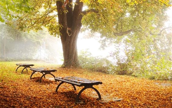 Fond d'écran Nature feuillage automne parc