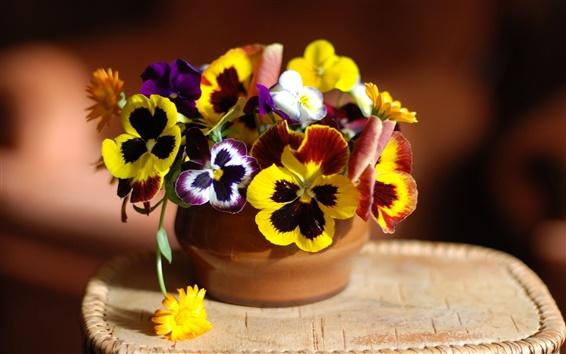 Обои нютины глазки цветы и календулы