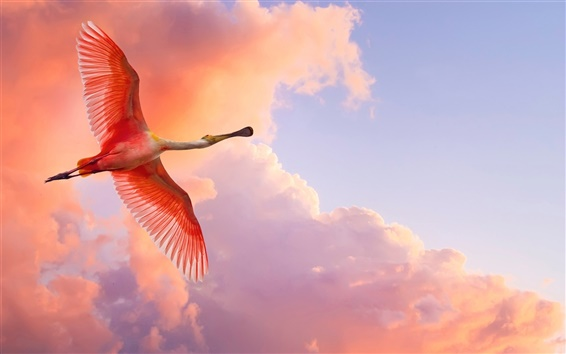 Wallpaper Red feather bird flying in the sky