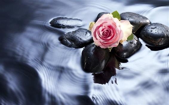 Fond d'écran Roses dans l'eau