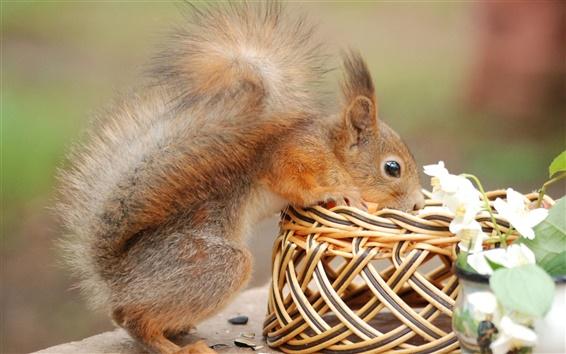 Wallpaper Squirrel curiosity
