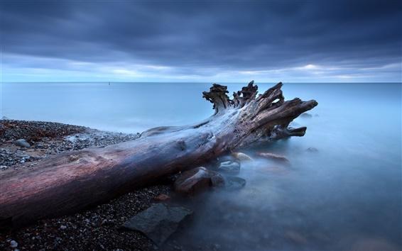 Обои Корни деревьев туман скалы море