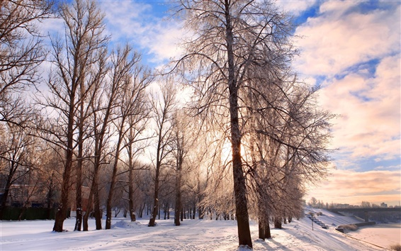 Wallpaper Winter snow cold frost trees
