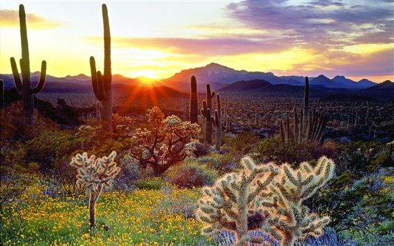 Wallpaper American scenery, the mountain is covered with cactus