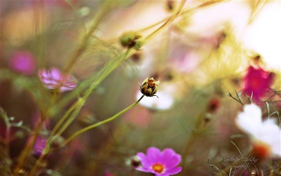 배경 화면 아름다운 정원, 꽃의 꽃봉오리