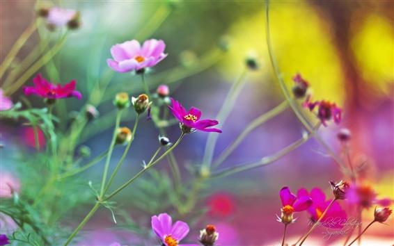 Fondos de pantalla Un hermoso jardín de flores de la primavera de cerca