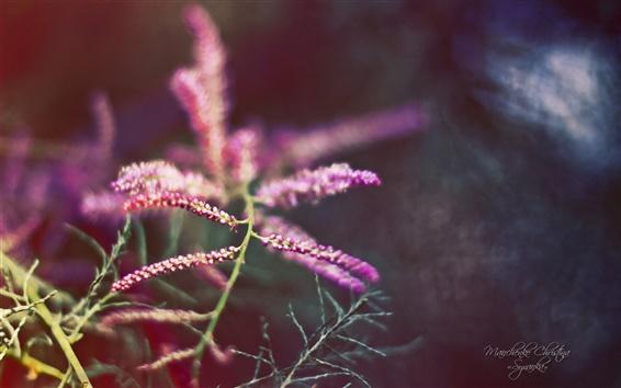 배경 화면 아름다운 정원, 보라색 꽃 매크로