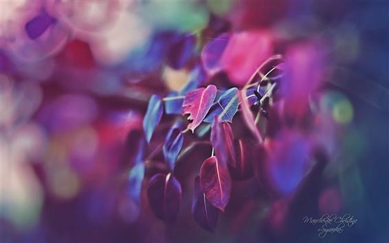 배경 화면 아름다운 정원, 보라색은 매크로를 떠난다