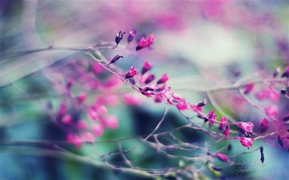 Papéis de Parede Belos jardins, nebulosas flores roxas