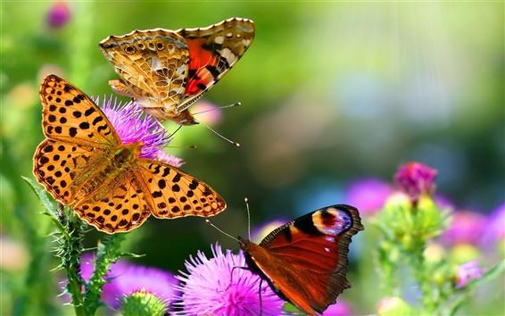 Fond d'écran De beaux insectes, les papillons