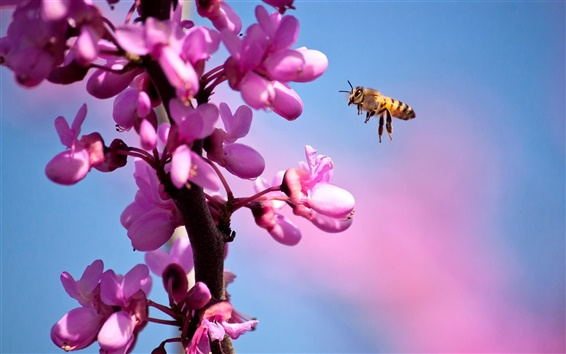 Wallpaper Bee and purple flowers