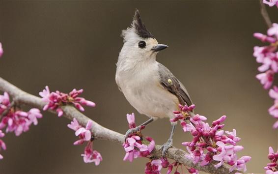 Wallpaper Bird in the flowers in full bloom