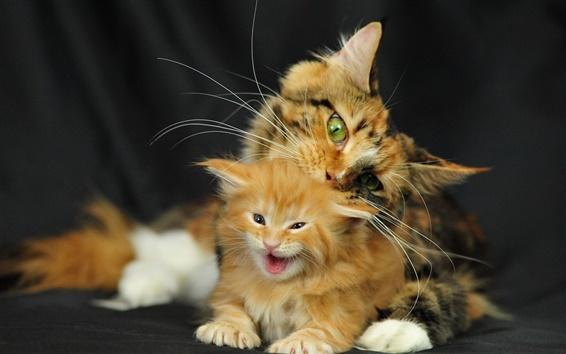 Wallpaper Cat mother cat baby