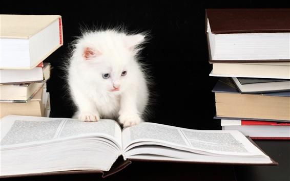 Обои Кошка чтения