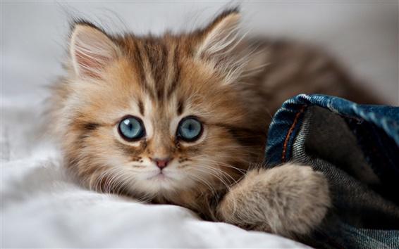 Wallpaper Cat want to sleep