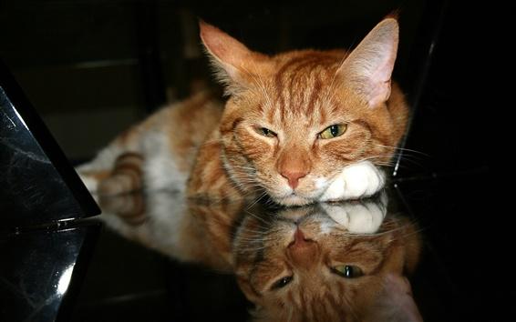 배경 화면 눈을 meditatively 고양이를 닫습니다