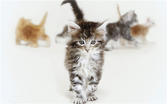 Wallpaper Cute kittens walking