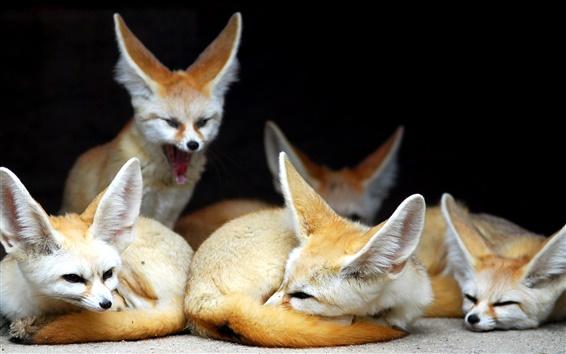 Papéis de Parede família Foxes