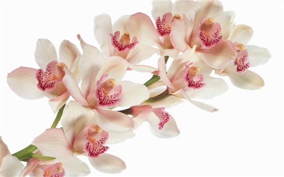 Fond d'écran Fleurs d'orchidée close-up