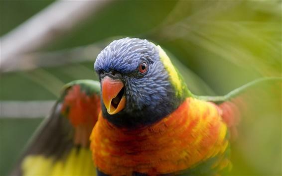 Wallpaper Parrot birds close-up