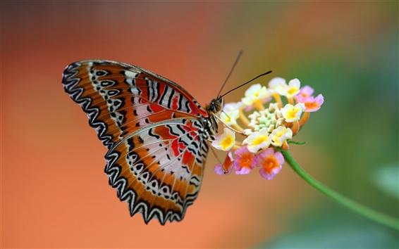 Papéis de Parede Red néctar sugar borboleta