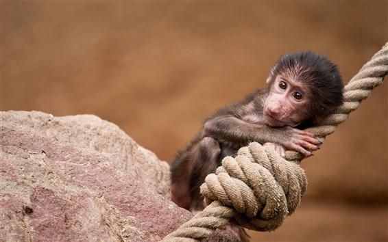 Papéis de Parede Macaco mini-corda