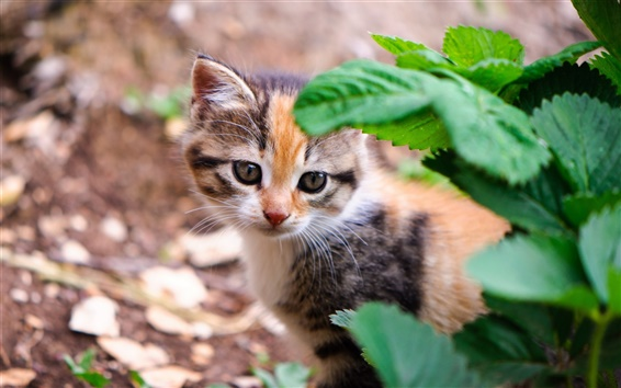 Fond d'écran Petit chat dans les feuilles vertes