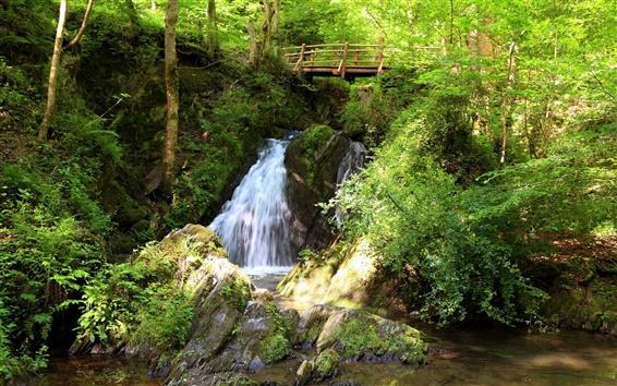 壁紙 森の小さな滝
